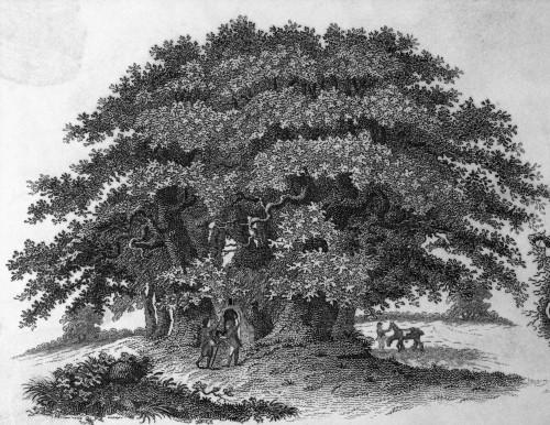 Old Timey Chestnut