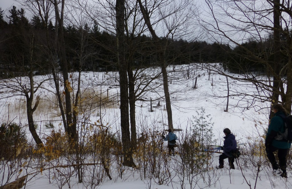Hiking into the Wetland
