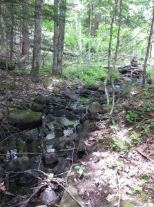 A stream corridor on the protected property provides additional aquatic habitat connection to the larger wetlands on the Timberwood Commons parcel. Photo by Amber Boland, Upper Valley Land Trust.