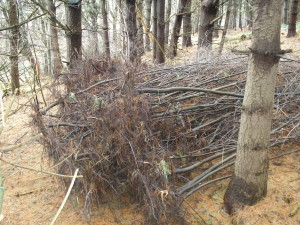 Buckthorn Pile - Dana Hazen photo