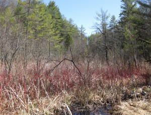 The Quechee Fen property holds important ecological and cultural value. This photo shows the rich fen on the property in April 2013.