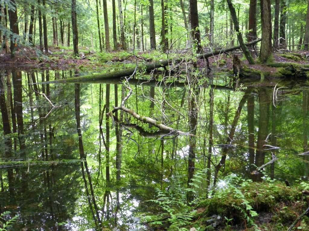 The vernal pool located in the forest of 'Helen's Haven'. Photo also from the May site visit.