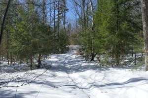 Ski tracks in woods at conserved Pout Pond property.