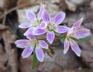 flowers 057 (1)