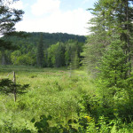 """Summer view across the conserved wetlands on Judith Taylor's """"Ravenwood"""" property, conserved by UVLT in 2012."""