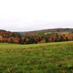 Fall views across newly conserved fields and forests in southern Corinth. The vibrancy of the land is palpable.