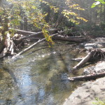 Meadow Brook in southern Corinth is a cold fast-flowing stream that cascades toward the South Branch of the Waits River.  Two UVLT conservation easements now protect over a mile of riparian buffers along this waterway.  This view from 2012 shows woody debris left from Tropical Storm Irene – protecting a healthy riparian corridor can slow and ease the floodwaters of future storms.