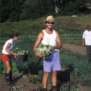 Harvest on Cobb Hill Farm_for web