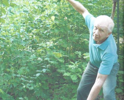 Put Blodgett shows impacts of deer at his woodlands. Fence erected 11/14/02. Picture taken 7/10/08. (5.5 growing seasons.) Thick regeneration 6 feet high inside, less than knee-high outside.