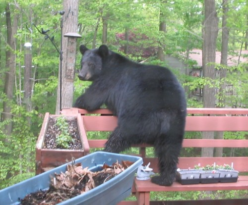bear bird feeder 2