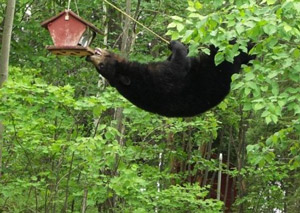 bear-bird-feeder
