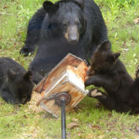 bears-bird-feeder 4