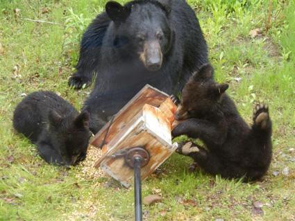 bears-bird-feeder 4