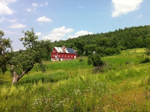 jersey farm