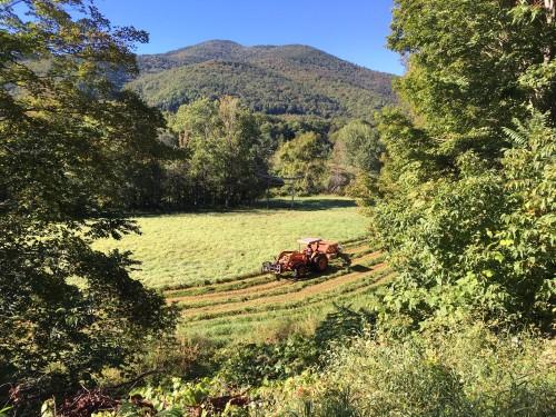 lowerfield haying